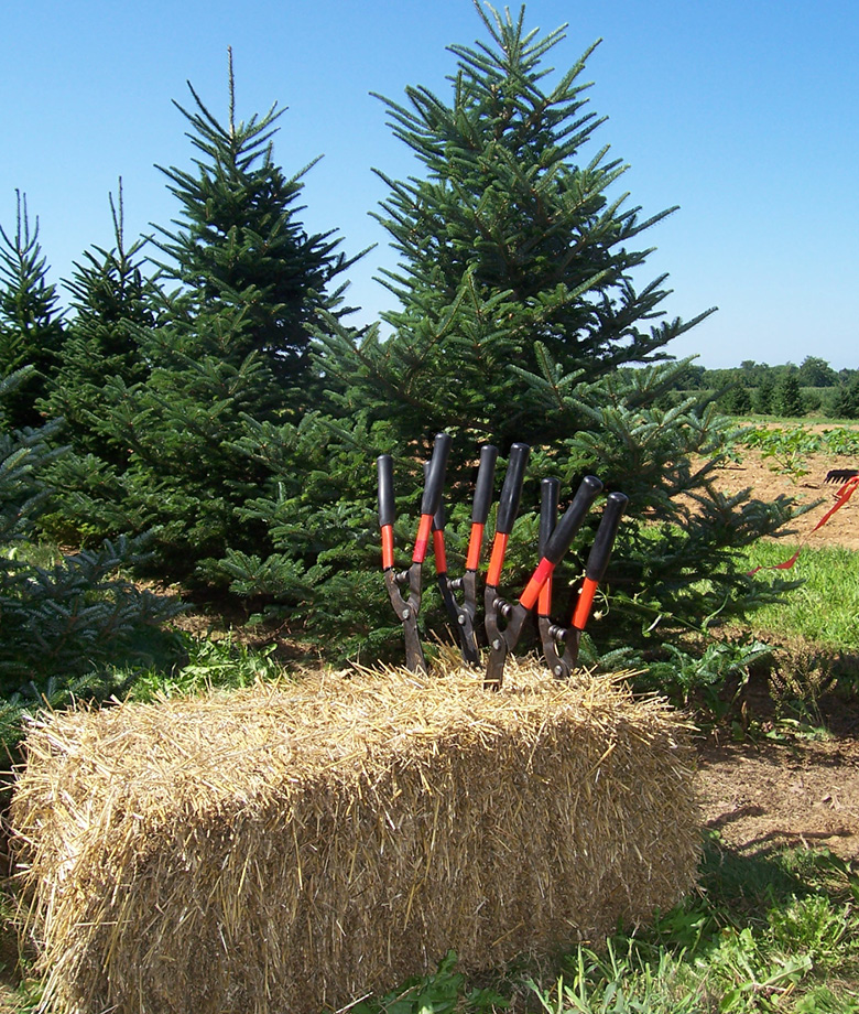 Classified Ads - Welcome To The PCTGA €� Pennsylvania Christmas Tree Growers Association